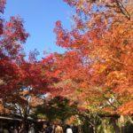 【京都・そば処】大原三千院前で紅葉を見ながらランチが食べられる店