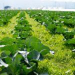 【アフィリエイト】ブログの記事を作成し続けて思ったんだけど農業と同じだと思う